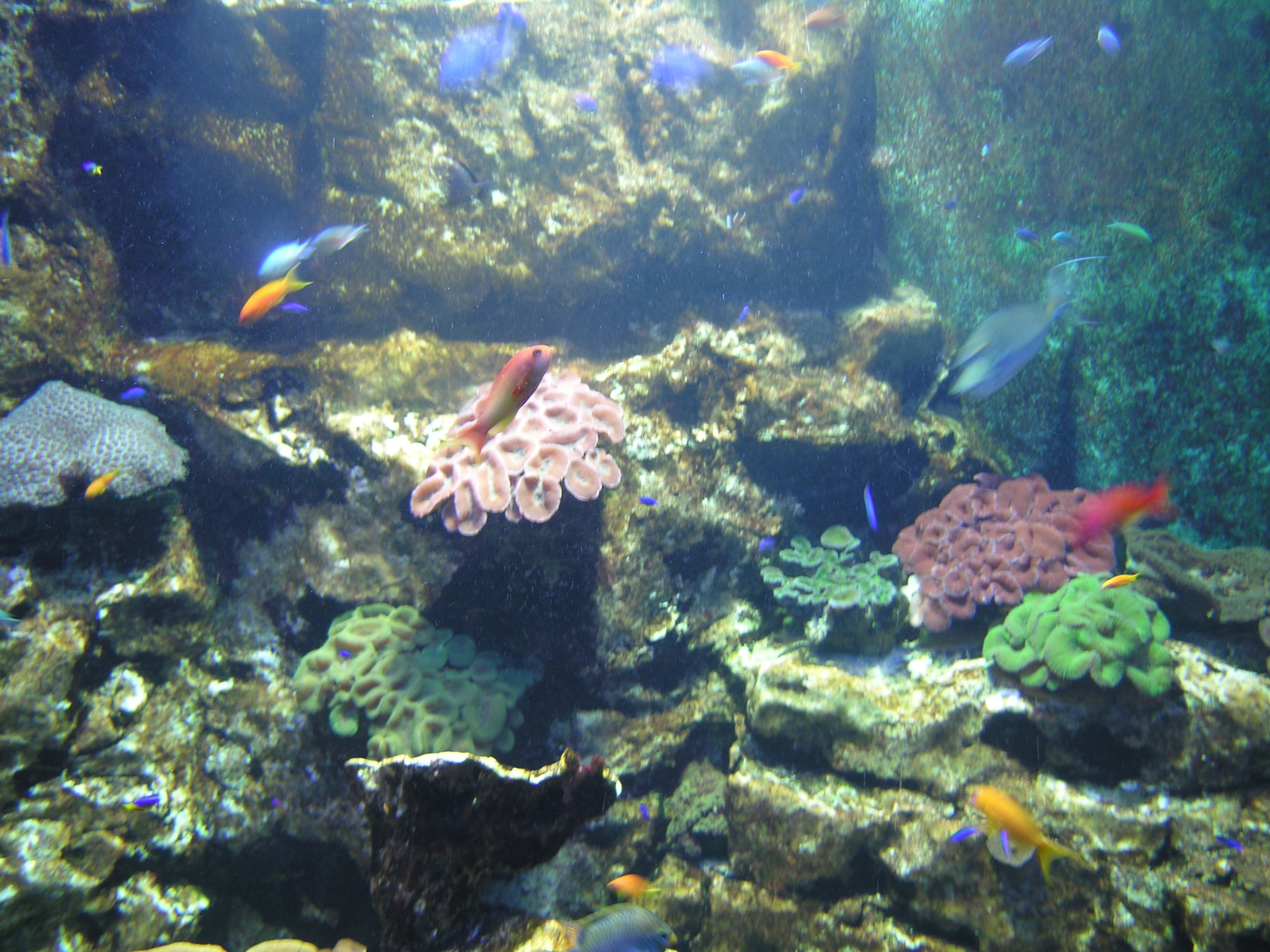 grand aquarium de malo